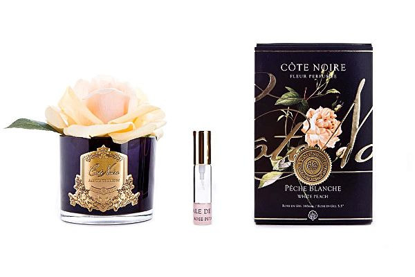 Роза Cote Noire French Rose White Peach арт. GMRB05